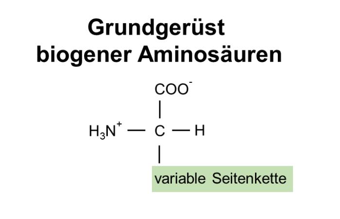 BCAA Aminosäure Grundgerüst.PNG